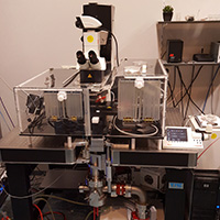 X-ray Multi Micro-beam Microscope